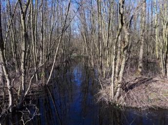 Basel - de mangroves van de Schelde (2018)
